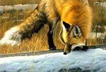 Wildlife art: Nancy Glazier