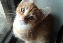Moje kočky - Majky, Ejmy / Majky - zrzavý, Ejmy - šedivá
