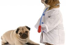 Dog Health Care Tips / Get all news about dog health care, dog health care tips, health issues ans its treatment at dogexpress.in