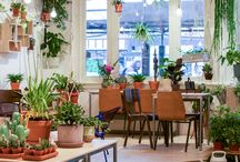Plant stores
