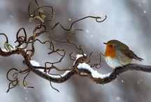 Winter little birds
