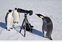 Fotos vs. Tiere