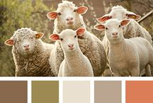 colour palett