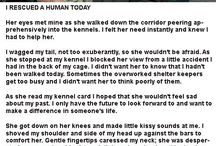animals are more human