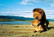 l'amour entre animaux / tous sure l'amour des animaux alicia et leonnie