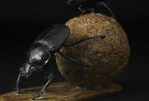 Dung Beetle - sculpture / Bronze sculpture by Hamish Mackie, signed, dated and numbered limited edition