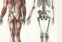 ANATOMY: FULL BODY