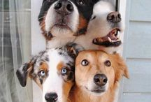 Love Mutts / In order to be irreplaceable, one must be a little different!