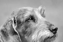 MUSCH koirat