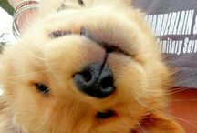 fotos tumbler con mascotas