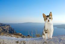 Cat/ Photographer: Mitsuaki Iwago 岩合光昭