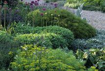 planting schemes / by Lindiwe Coyne