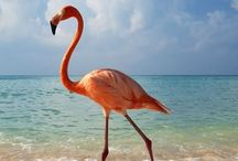 Graceful Birds/Aves graciosas