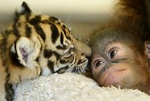 Baby animals so sweet! / Baby animals