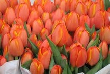 Buzy Gardening / Tip: To keep your daffodils or tulips longer, put a 1/2 aspirin tablet in the water.