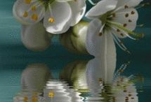 Flowers make me smile / by Lisa Hansen