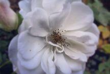 Fleurs / Fleurs et jardins