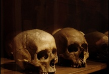 Anthropology / Ok, so it's mostly just cool pictures of skulls.  But you know, some of it is anthropological.  Mostly physical anthropology, or biological anthropology.