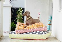Dogs on stylish dog beds