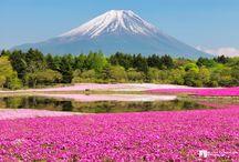 Asia/ Japan