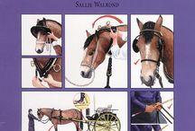 Koně-rady