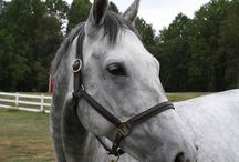 Horses who found Homes / #adoptedThoroughbred