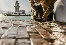 İstanbul cats