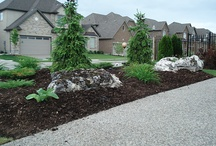 Front Yard Planting