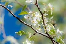 Springtime! / by June Frances Alcorn Rogers