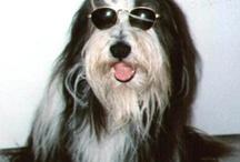 Dog's / All my stuff