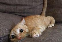 Cute baby kitteh