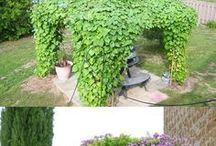 Garden Climbing Plants