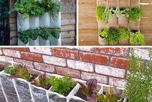 cheap garden ideas budget backyard