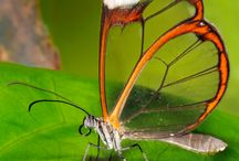 Mariposas del mundo