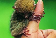 Indonesian flora and fauna