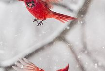 cardinals / by Layci Toler