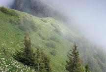 2. Nature//Mist and fog