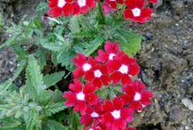 çiçekler ve bitkiler