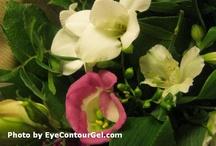 Flowers and Gardening / Flowers and Gardening