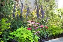 karen's garden / ideas for a suburban garden