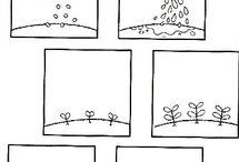 Rozwój roślin