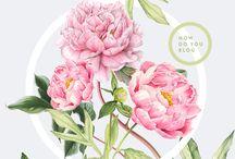 flower shop: marketing / flower shop branding and marketing inspiration