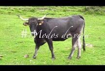 """Vídeos de NansaNatural en el valle del Nansa. Cantabria / Nansa Natural. Experiencias rurales para conocer y sentir el territorio. """"Si algo bueno te pasa, viaja para celebrar. Si algo malo te pasa, viaja para olvidar. Si nada te pasa, viaja para que algo pase""""."""