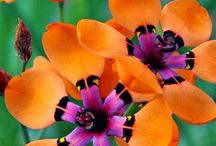 Beauty flora