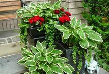 Jardin / Plantas