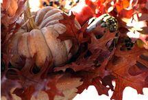 Autumn / by Stephanie Carson