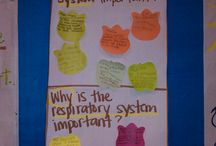 Anchor chart--science