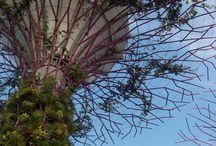 Travel: Singapore