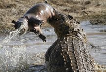 Amazing Wildlife Sightings / A collection of interesting wildlife sightings