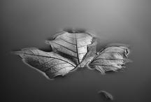 Photography / by Nom Sadako